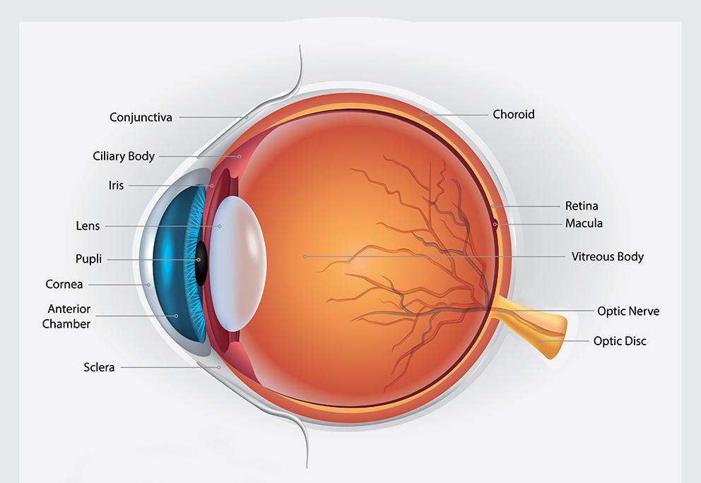 Tratamiento de retina con láser